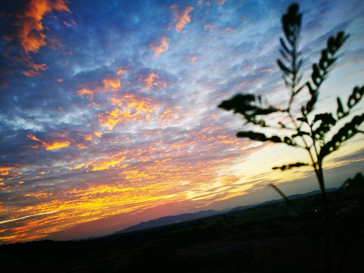 Sunset Sky Cloud - Sky Tree Nature Beauty In Nature Silhouette No People Dramatic Sky Scenics Outdoors Human Hand People Adult One Person Adults Only Human Body Part Leisure Activity Day My Year My View TakeoverMusic Close-up Young Adult First Eyeem Photo Waiting Game