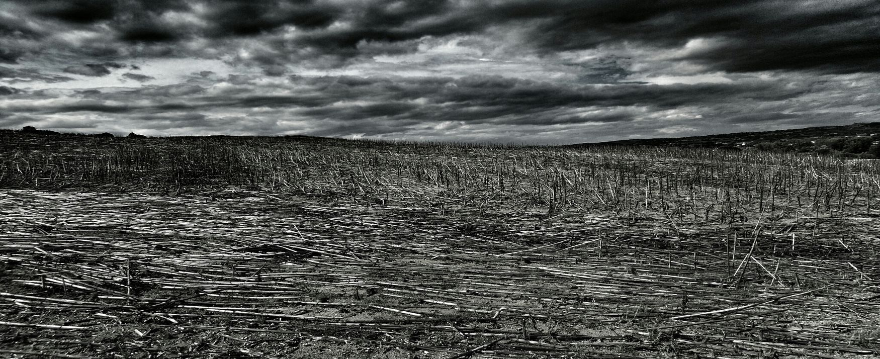Desolate Landscape in Black And White