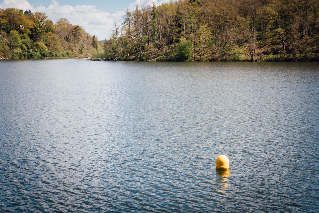 water, floating on water, day, no people, lake, nature, outdoors, tree, sky