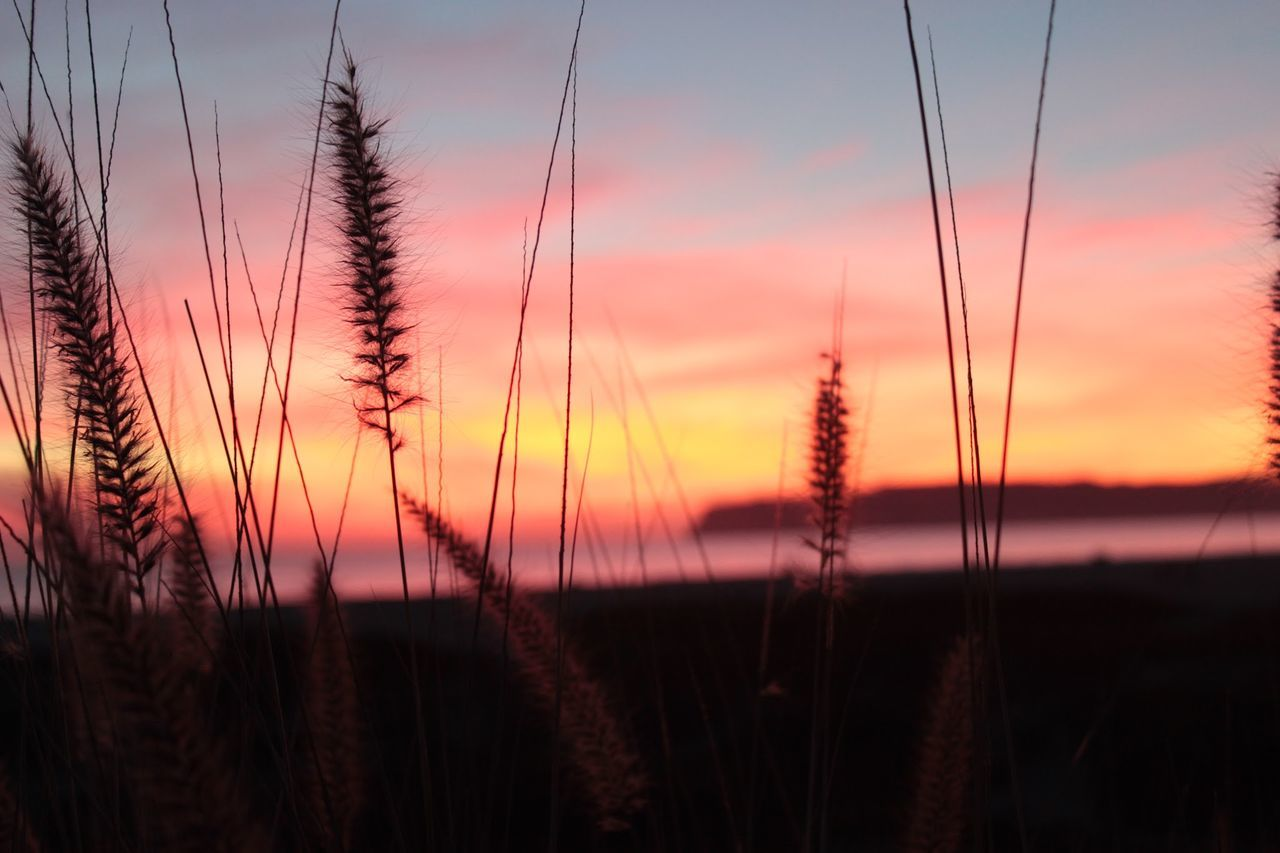 Day Is Done Gentle Sea Grass At Sunse Sea Grass At Su Sun Setting On The Beach Sunset Sunset And Sea Gra Sunset At The Beach Tall Sea Grass At Sunse Pastel Power Pastel Power!