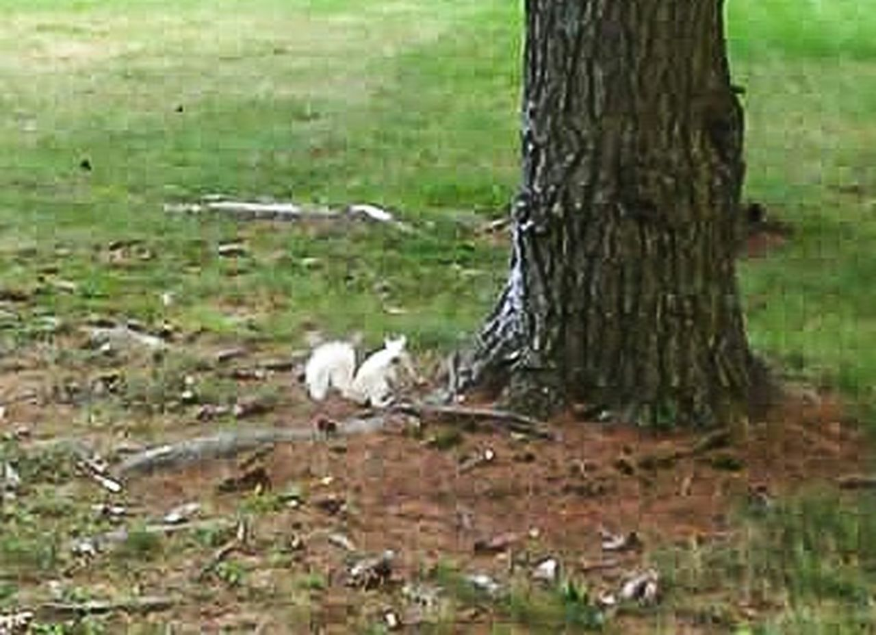 Showcase April White Squirrel Manatawny Park Beautiful Nature Beautiful Wildlife Wildlife Photography Wildlife & Nature Check This Out Enjoying Life Relaxing Things I Like Beautiful Day Spring 2016 Spring Has Arrived Photos By Jeanette Awesome