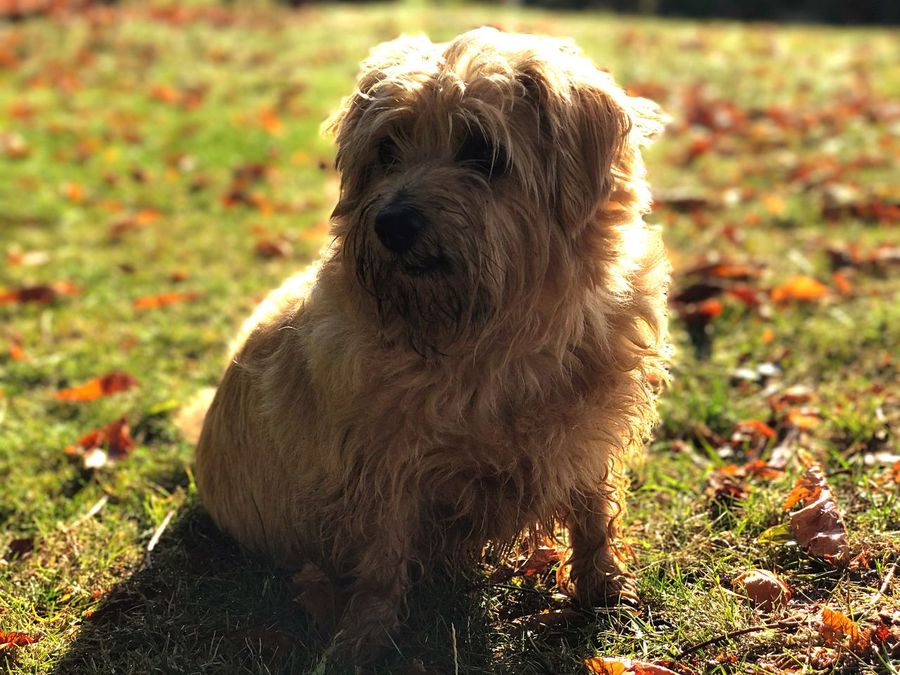 EyeEm Selects Dog Pets Animal Themes Domestic Animals One Animal Animal Hair Mammal Grass Field Sunlight Outdoors Day Focus On Foreground Sitting No People Nature Golden Hour Be. Ready. Be. Ready.