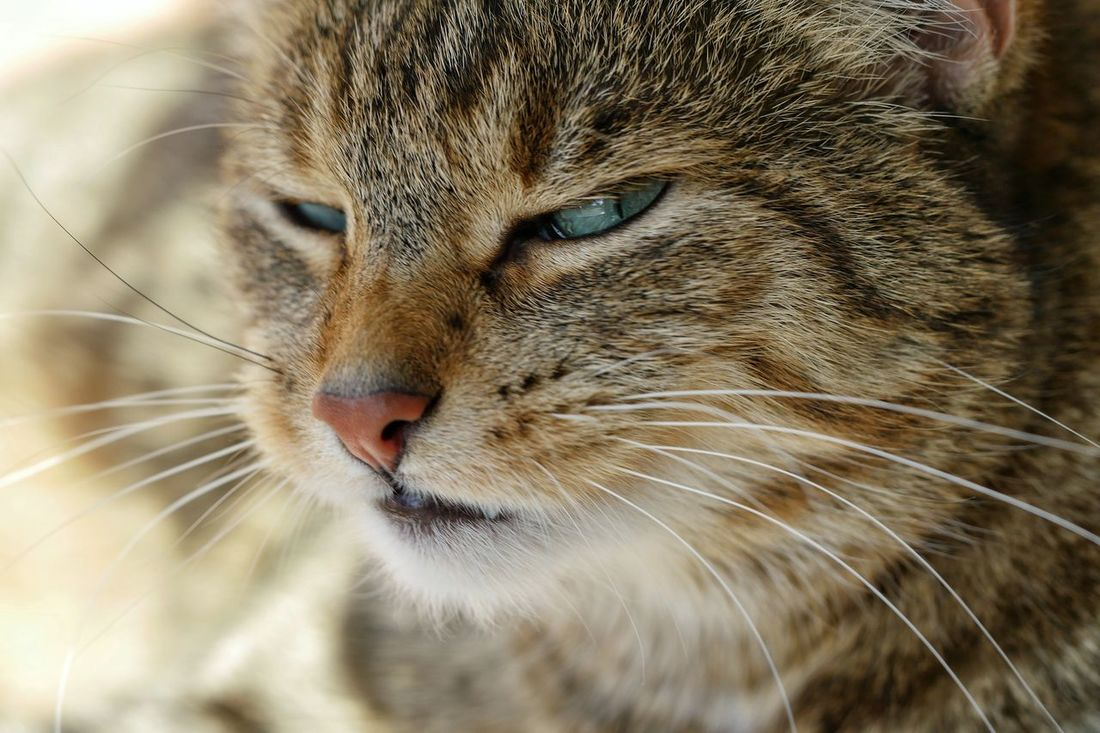 Any Questions? Cat Cats Pet Pets Animal Themes Closeup No People Animals Cat_collection One Animal Animal Photography Pet Photography  Catportrait Cat Watching Macro Funny Moments Q Question