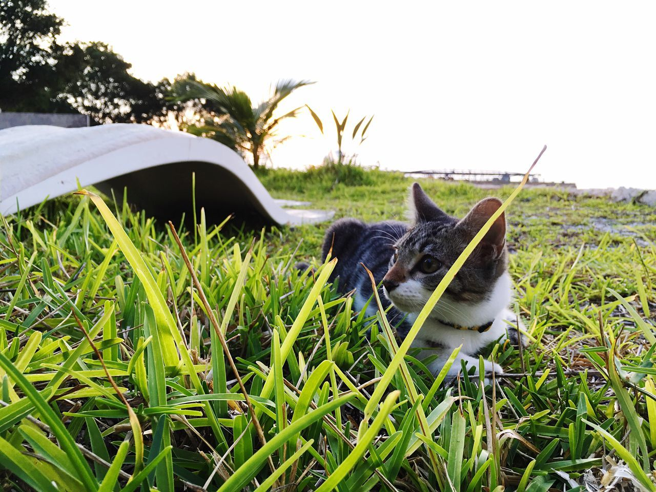 Domestic Animals One Animal Animal Themes Pets Grass Mammal Field Nature Outdoors No People Day Sky Beauty In Nature Close-up Kitty Beachcat Cuco