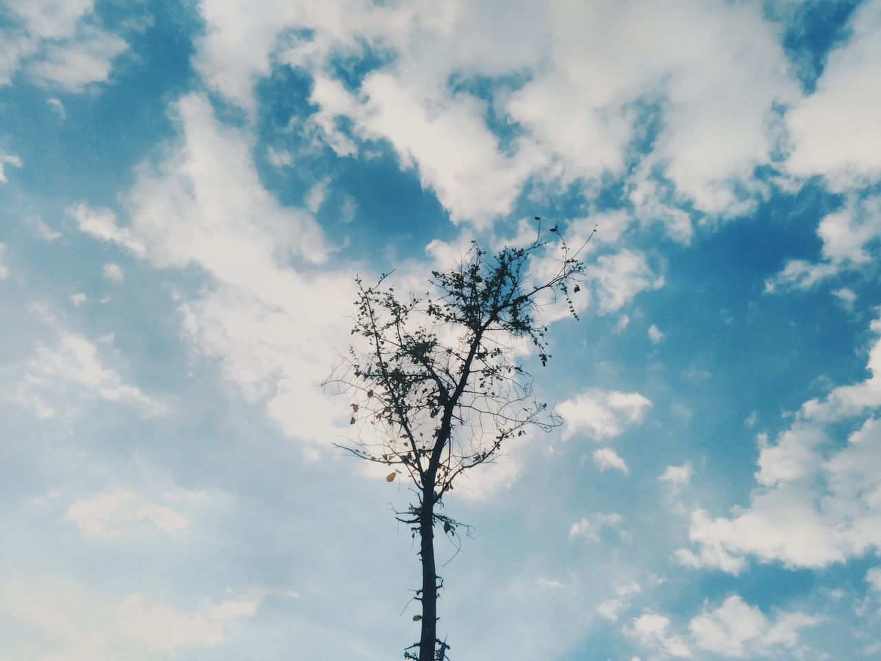 Sky Cloud - Sky Nature Tree No People Beauty In Nature Thailand