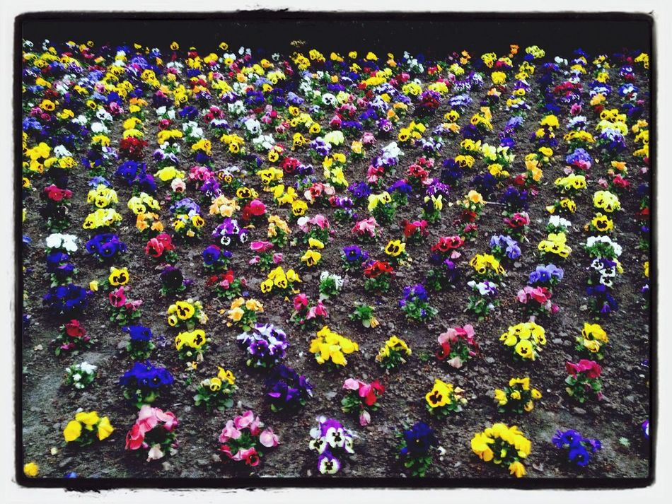 Spring wWalking AroundHanging Out Spring Flowers