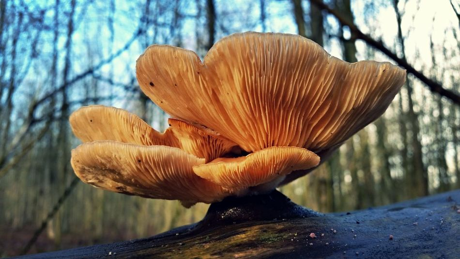 Macro Beauty Mushrooms Mushroom_pictures Mushroom Art Nature_collection Nature EyeEm Best Shots - Nature Mushrooms 🍄🍄 Mushroom Man Mushrooms Gallery Mushroom Forrest EyeEm Nature Lover Eyeem Best Shots Mushrooms EyeEm Best Shots Eyem Nature Natural Art  Forrest Photography Natural Beauty Holland