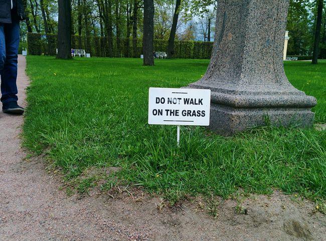 NOT ALLOWED Stpetersburg Russia SaintPerersburg Grass Environment