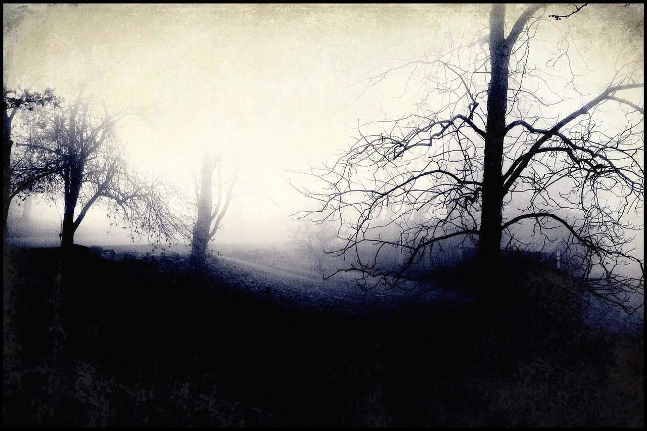 Silhouette Of Bare Trees In Fog