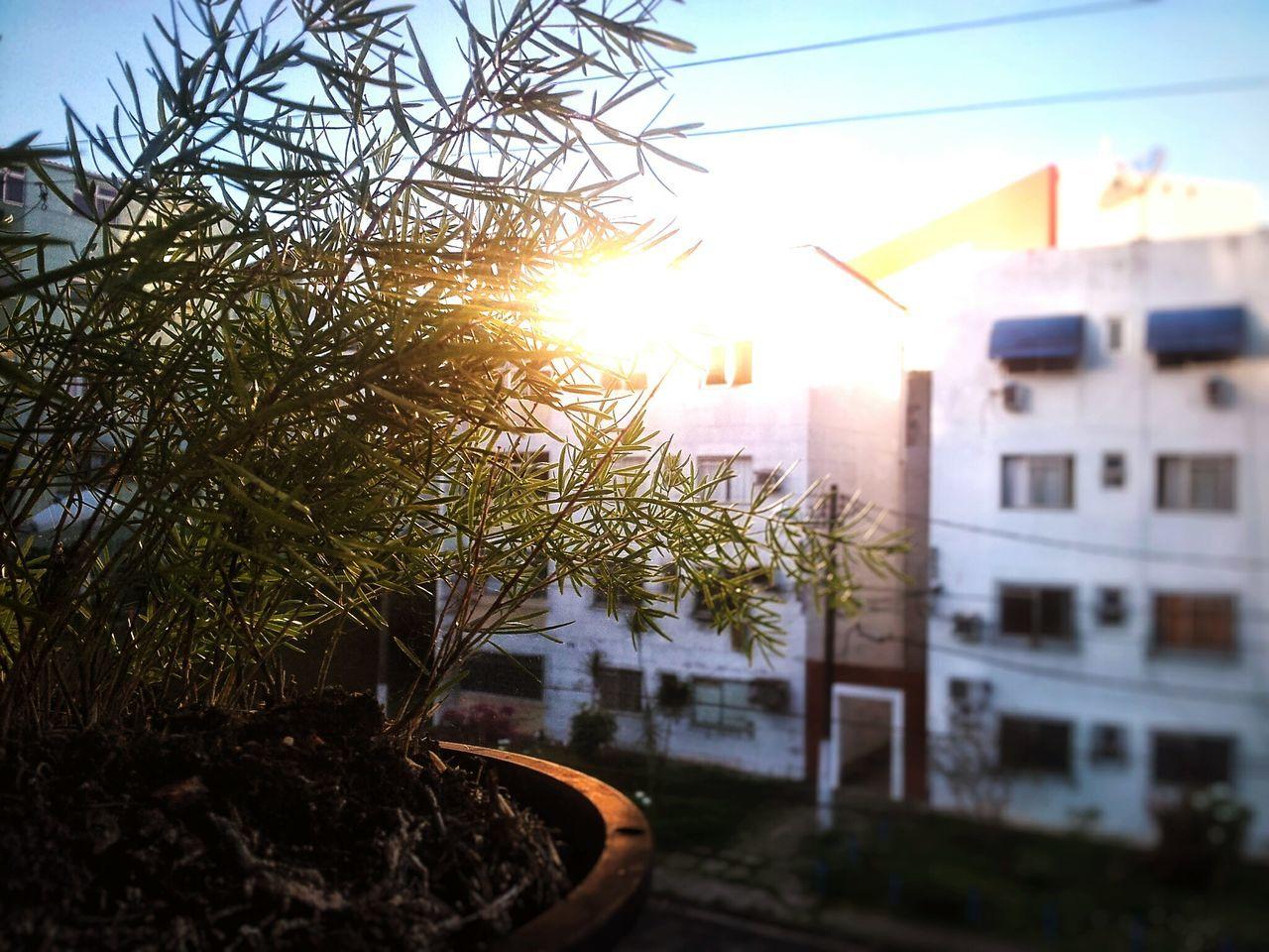 Bestangle Sky Sun Outdoors Green Nature Macro Focus