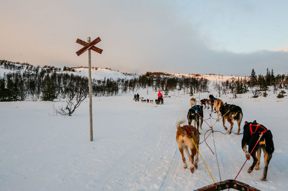Skiing Snow Sport Sports Photography Sweden Winter Wintertime Dog