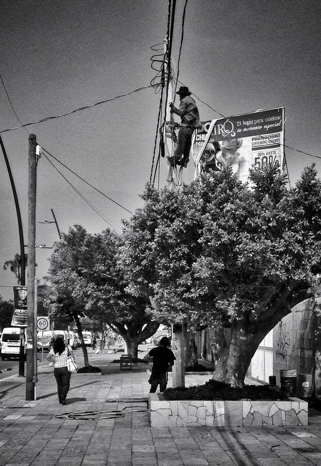 Árbol eléctrico Streetphotography Urban@ndante IPhoneography Blackandwhite Monochrome