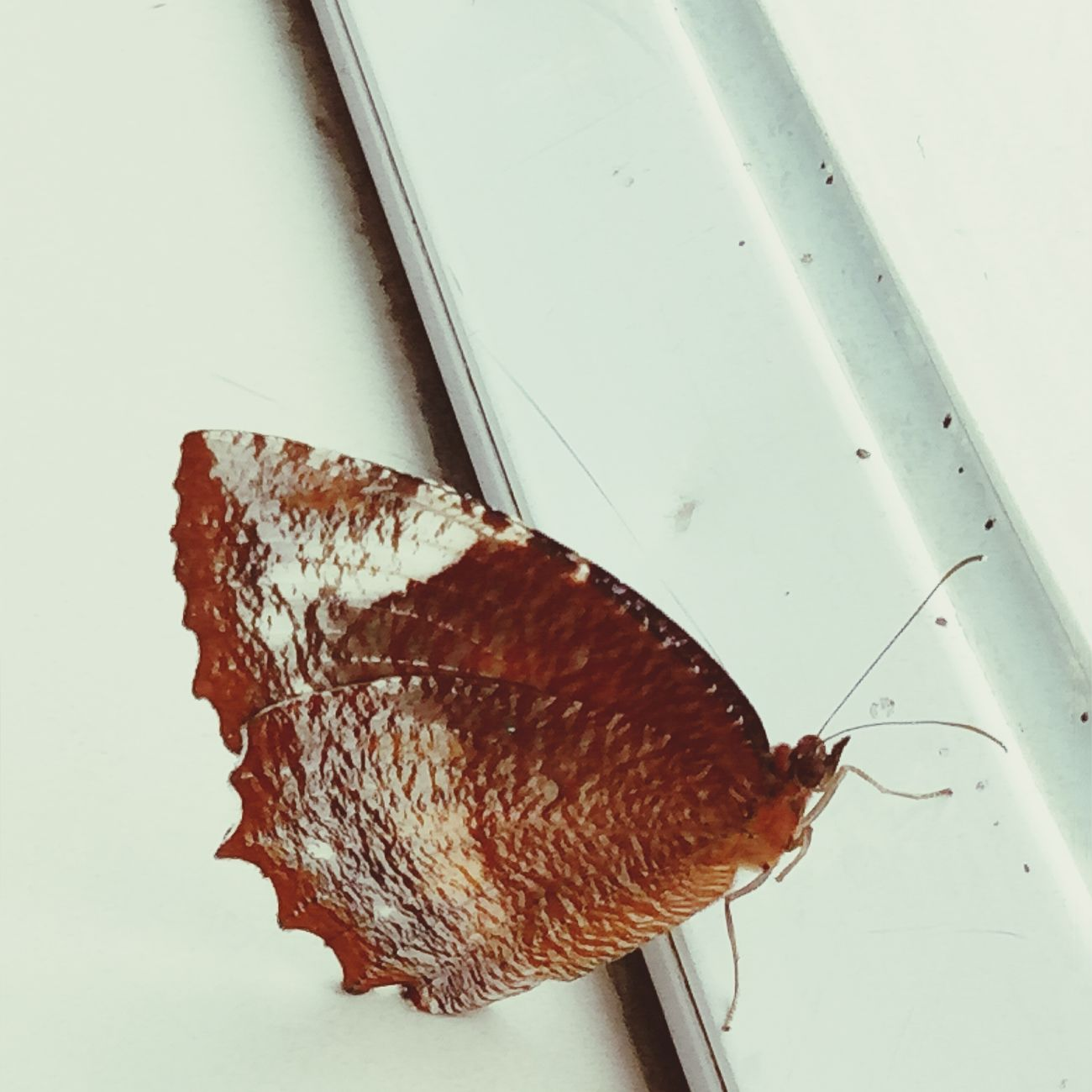 Butterfly Butterfly ❤ No People TheWeekOnEyeEM The Week On Eyem EyeEm Team EyeEmBestPics MyEyeEm Nature Nature Photography