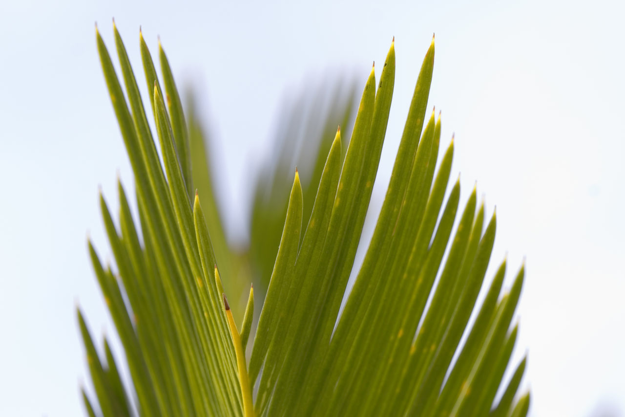 palm leaf - summer on the French Riviera Background Backgrounds Close-up Detail Flora Freshness Frond Green Green Color Growth High Section Leaf Nature No People Palm Palm Frond Palm Leaf Part Of Plant Relax Relaxation Spiky Tropical Tropical Climate Vacations