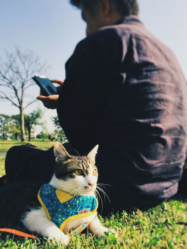 Cat Animal Streetphotography Check This Out Eyem Best Shots IPhoneography Relaxing