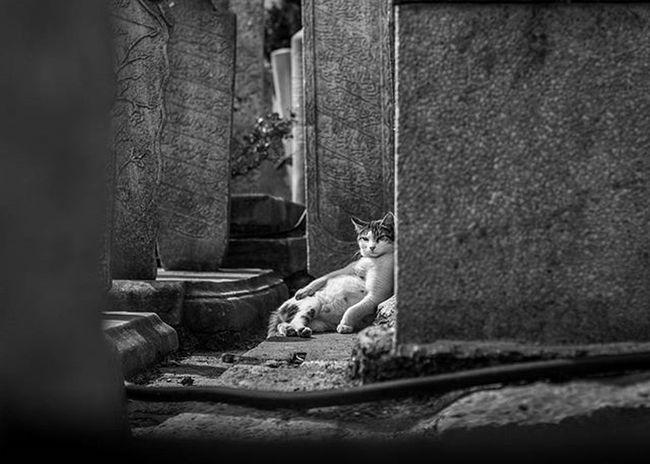 Sulalem Rahat Cat