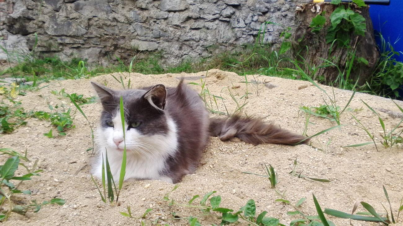 Lehárko.. Relaxing Cat