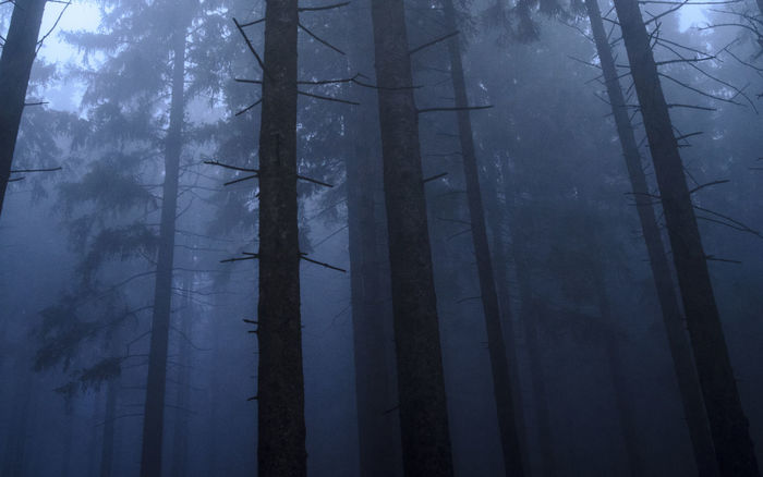 #fog #trees #winter #forest #Night #nightshot #photography #trees #trip Light No People