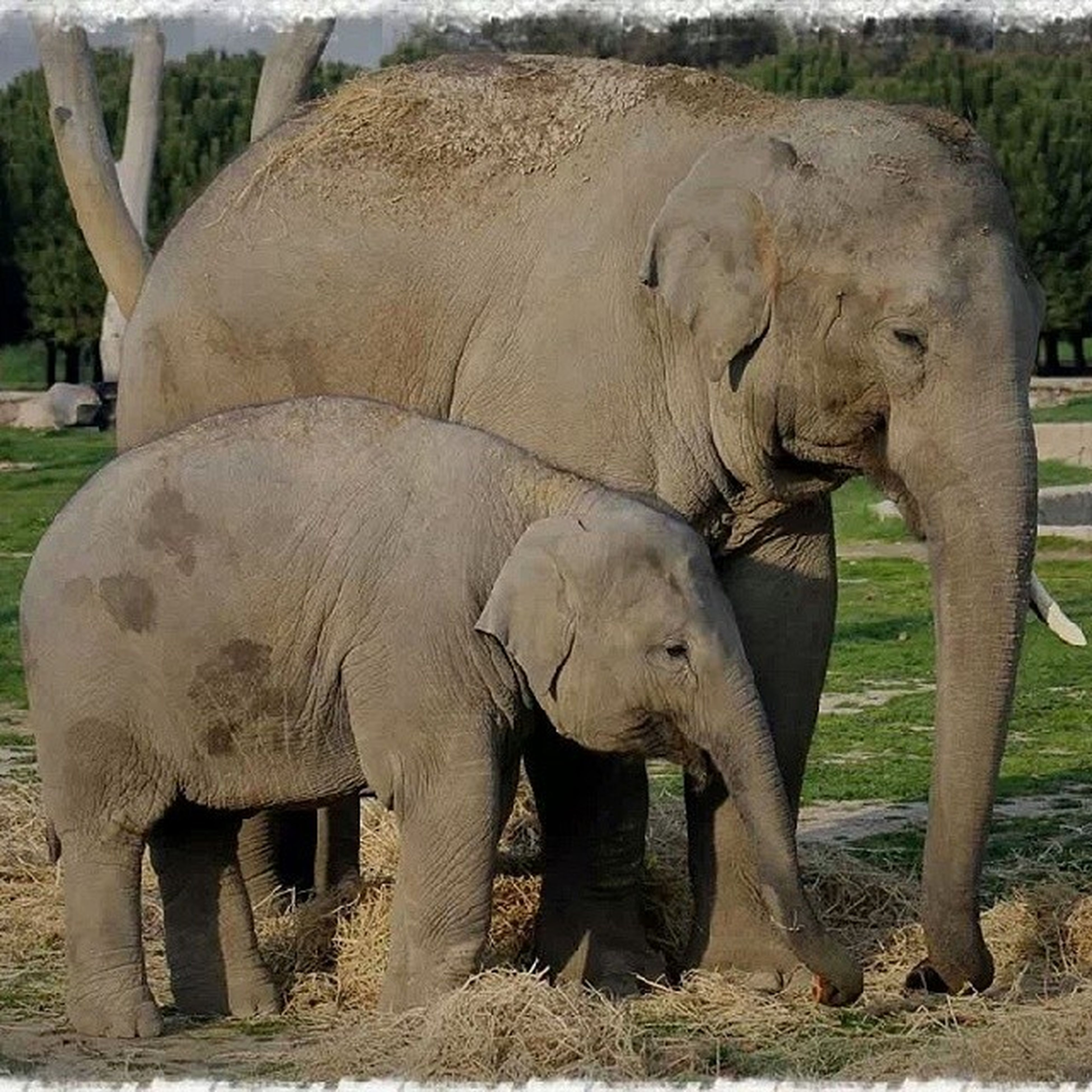 animal themes, elephant, grass, field, sculpture, wildlife, animals in the wild, statue, sunlight, nature, day, outdoors, no people, art and craft, two animals, tree, art, herbivorous, zoo, water