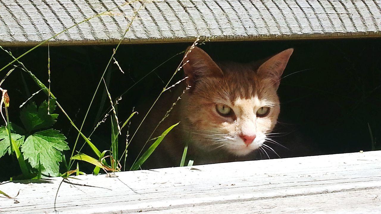 Biscuitbiff on the Stalk. Catsoneyeem Furbabies