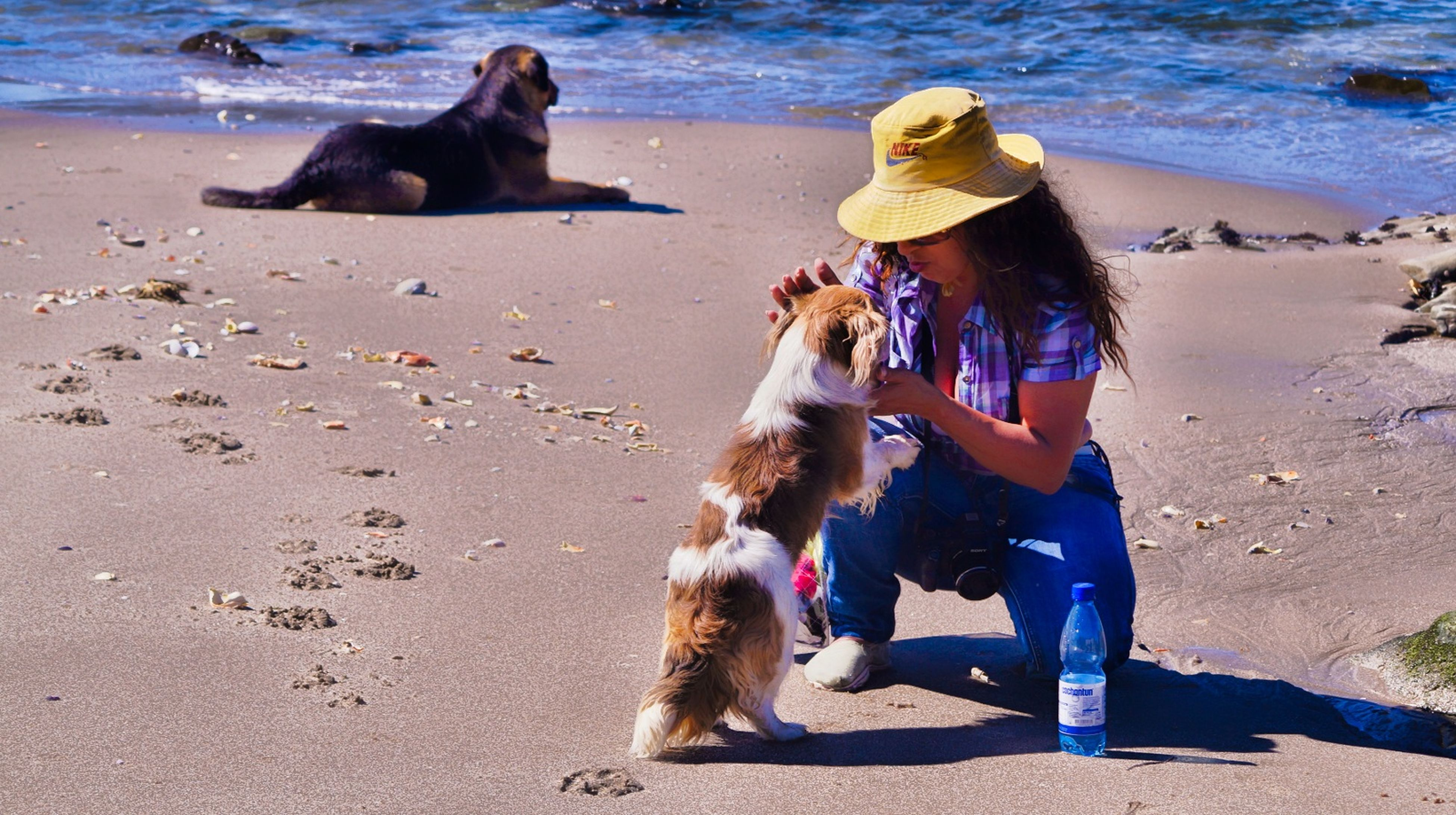 animal themes, beach, domestic animals, pets, sand, mammal, dog, shore, one animal, sea, togetherness, water, full length, sunlight, lifestyles, leisure activity, relaxation, day, shadow