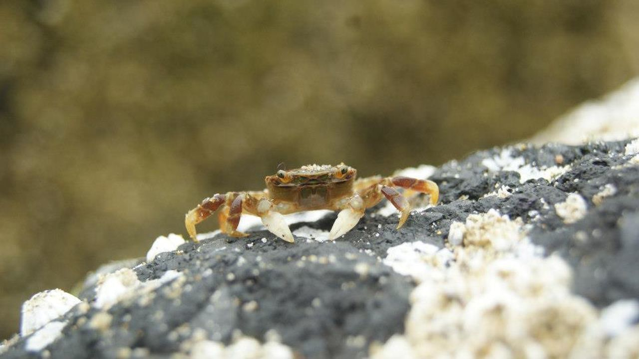 Animals Animals In The Wild Crab Dungeness Crab Ocean Life One Animal Oregoncoast Tidepools
