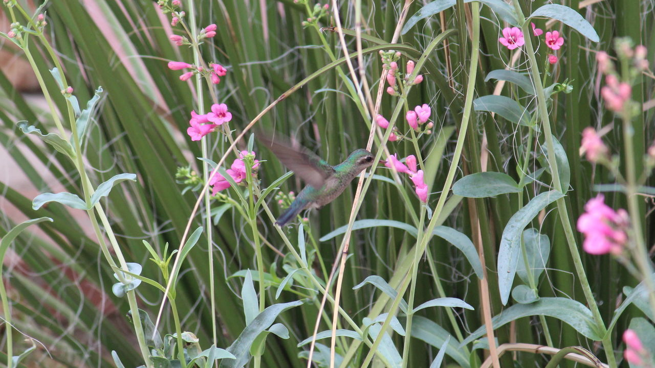 Beauty In Nature Blooming Close-up Day Field Flower Flower Head Fragility Freshness Green Color Growth Hummingbird Nature No People Outdoors Plant