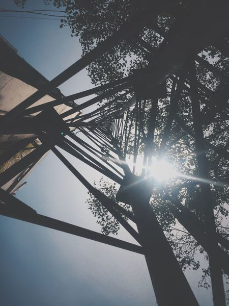 Shot on iPhone 6 Low Angle View Tree Sunlight Silhouette Nature Day Outdoors No People Beauty In Nature Tranquility Forest Growth Scenics Sky EyeEmNewHere IPhoneography Iphonedaily IPhone Shape Architecture Illustration