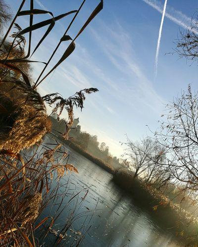 Winter Nature Heilbronn