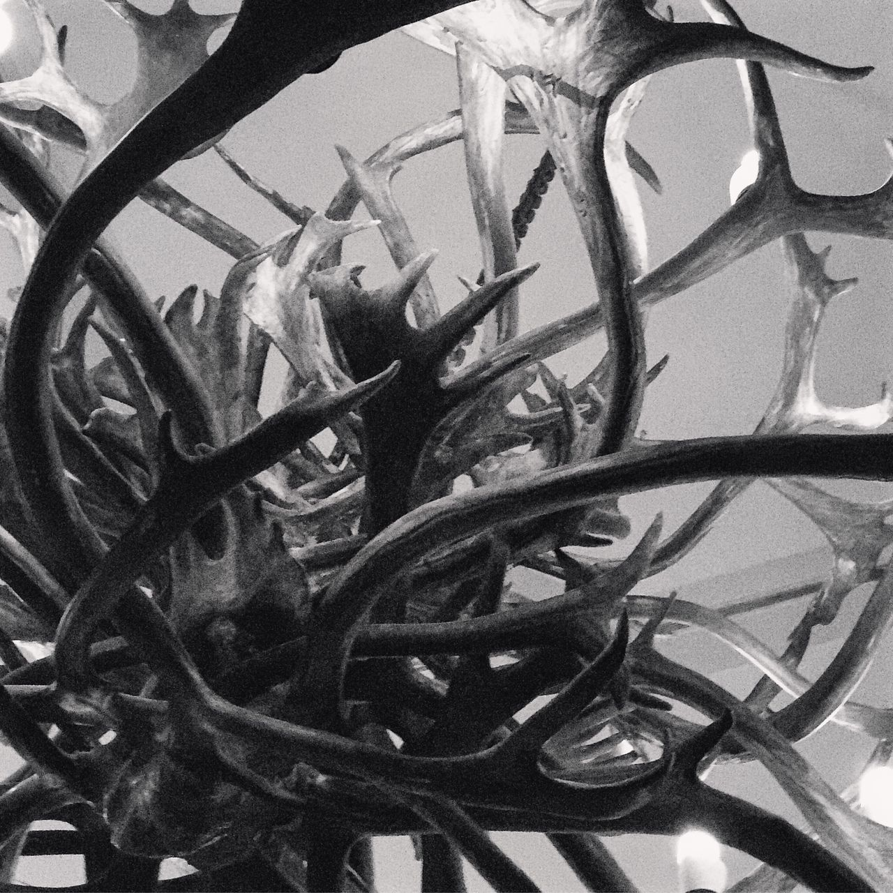 Close-up Outdoors Antler Antlers Stag Stag Antlers Blackandwhite Blackandwhite Photography Blackandwhitephoto Blackandwhitephotography Bandw Abstract Photography Abstract Abstract Art Sculpture Antler Art Art Photography Art ArtWork Cheshire Chester No People