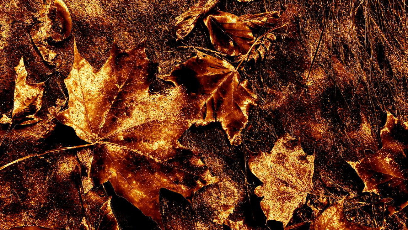 Backgrounds Full Frame No People Close-up Nature Day Leaves Maple Leaf Edited My Way On Fire Gold Colored Gold