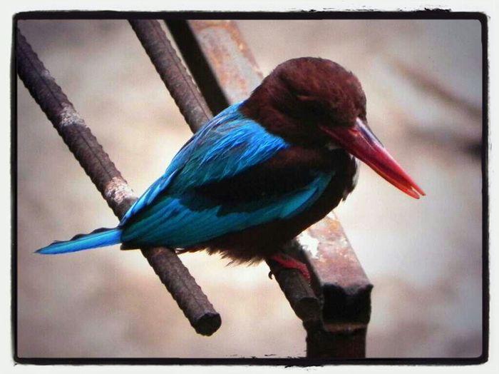 Cute Li'l Birdie!