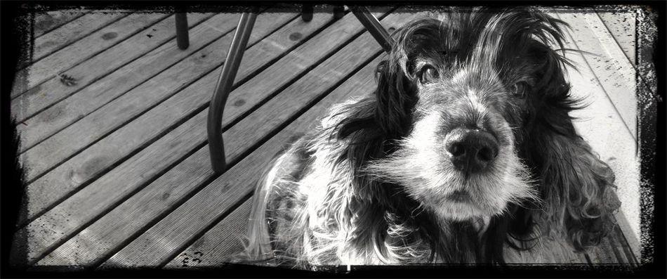 My Dog Chillin