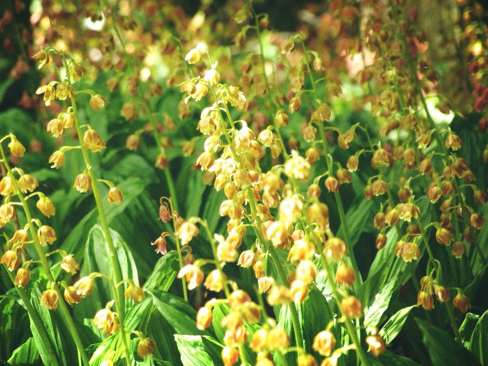 Calanthe discolor エビネ Flowers EyeEm Nature Lover Light And Shadow Forest Nature_collection Nature Early Summer