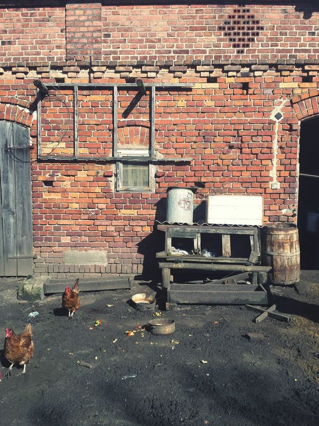 Poland Chicken Vilage Vilage House Smartphonephotography Architecture Photo Animals Eyemphotos Building