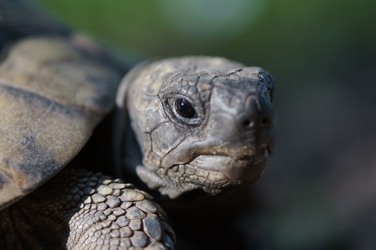 Portrait of a Turtle Animal Animal Portrait Animal Themes Calm Calmness Close-up Eye Contact Eye Level Low Depth Of Field Old Pet Portrait Relaxed Reptile Selective Focus Turtle Watching