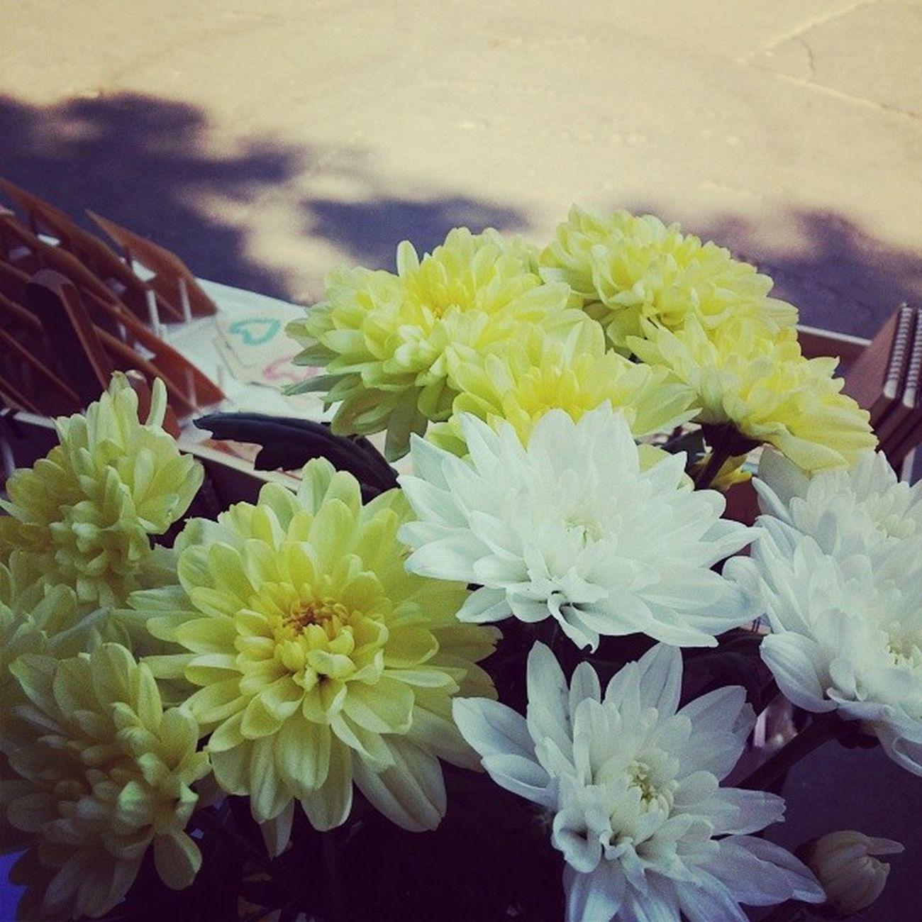 Новый фестик и новые цветы на стенде🌿 Km KyivMarket Kievmarket Flexiwood красотень