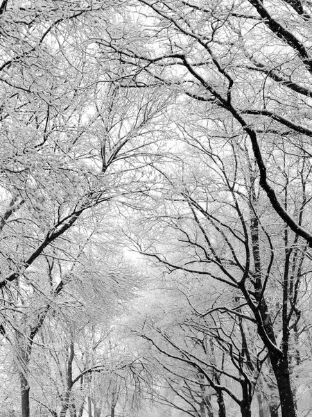 Snow Branches Nature On Your Doorstep bayside my