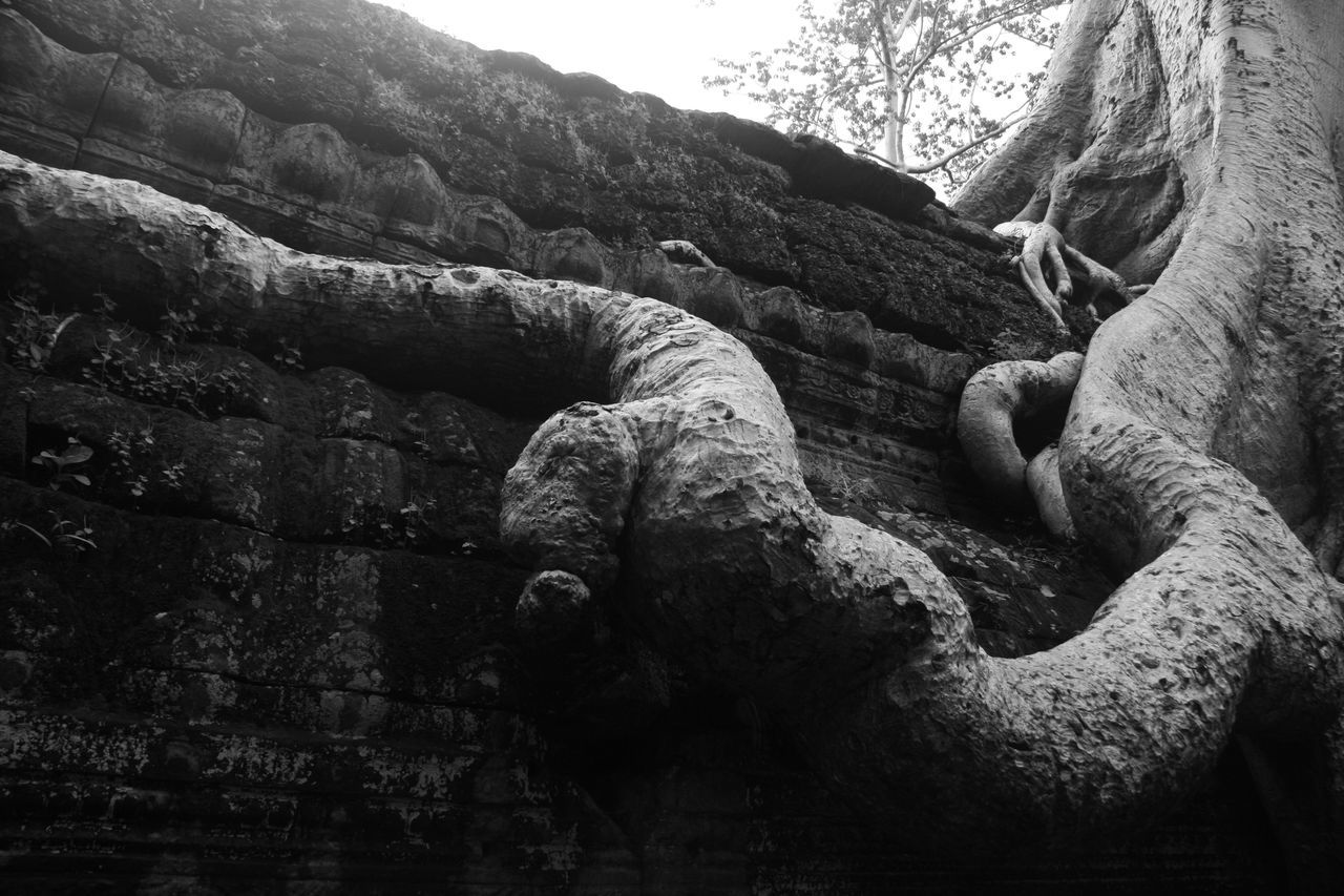 Tree on an ancient temple Ancient Beauty In Nature Black And White Blackandwhite Blackandwhite Photography Close-up Day EyeEm Best Edits EyeEm Best Shots EyeEm Best Shots - Black + White EyeEm Best Shots - Nature EyeEm Gallery Eyeem Market EyeEm Masterclass EyeEm Nature Lover EyeEmBestPics Konma Nature Nature No People Outdoors