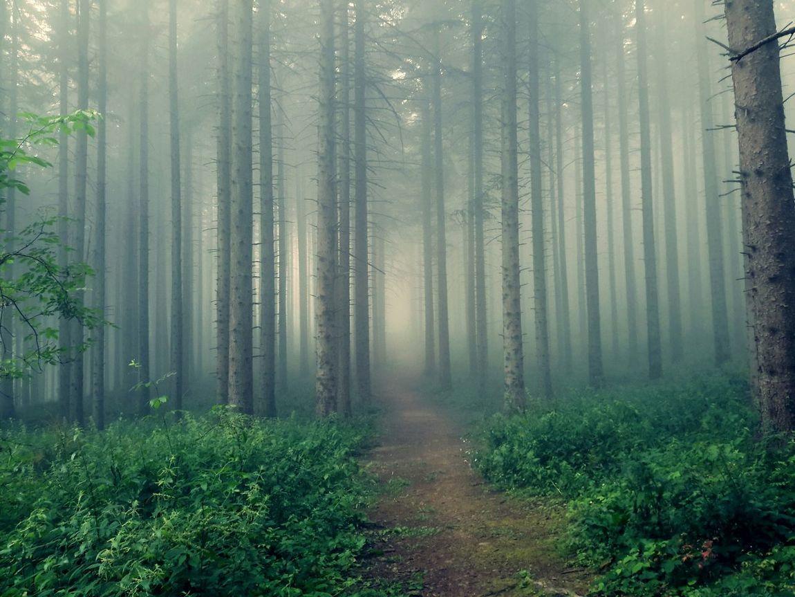 Sestola2k15 Foresta Foggy Day Foggyforest In The Forest