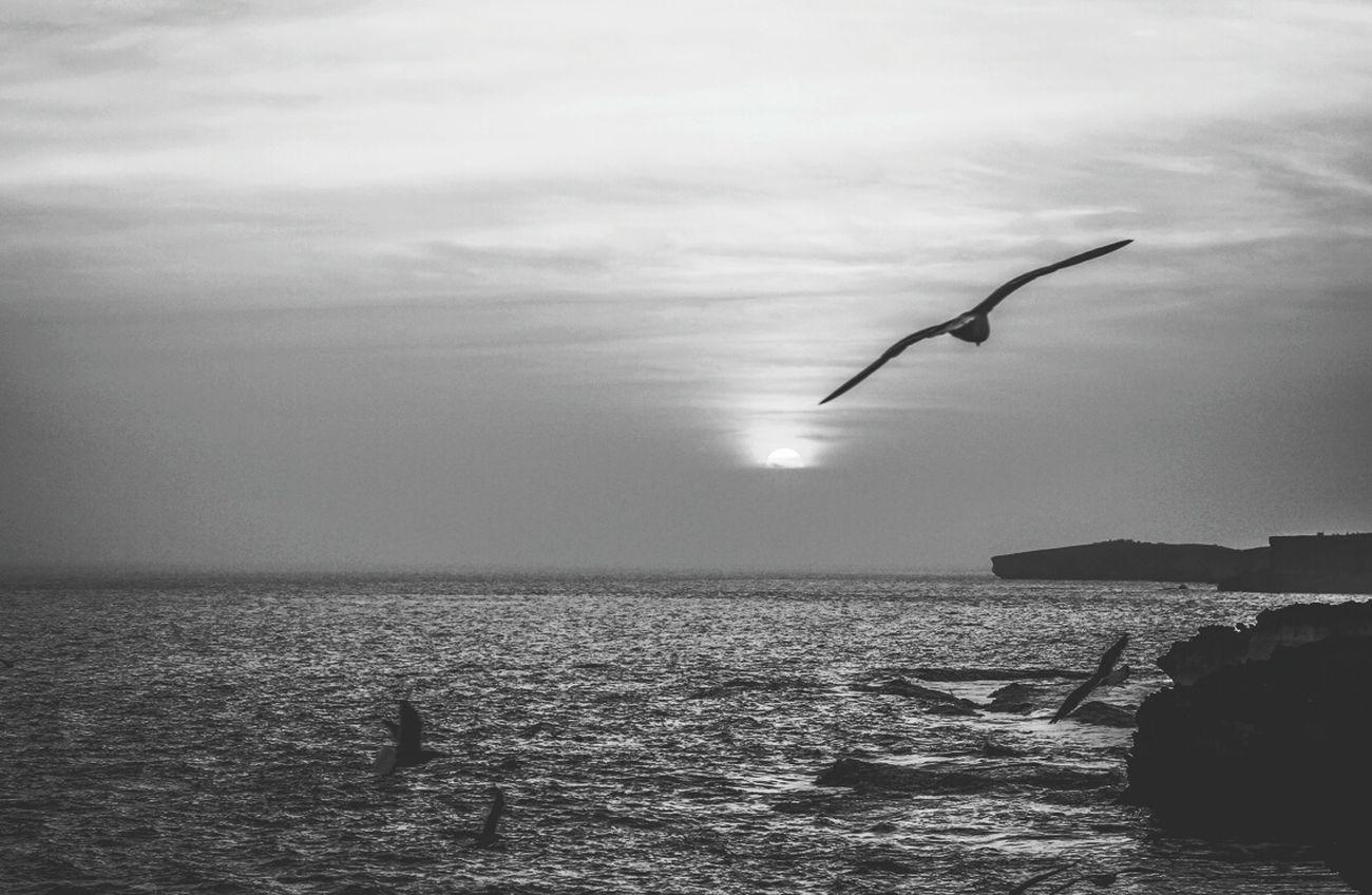 Sunset Seaside Bnw_friday_eyeemchallenge Black And White Landscape Bnw_sunset Monochrome Golden Hour