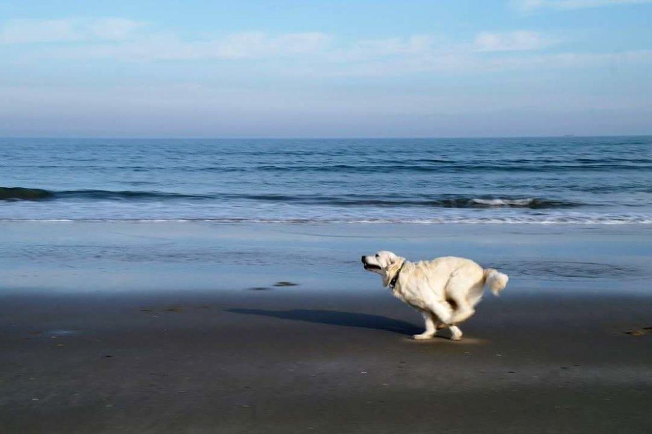 goldenretriever Lafelicità Sempreingiro mare Dogslife
