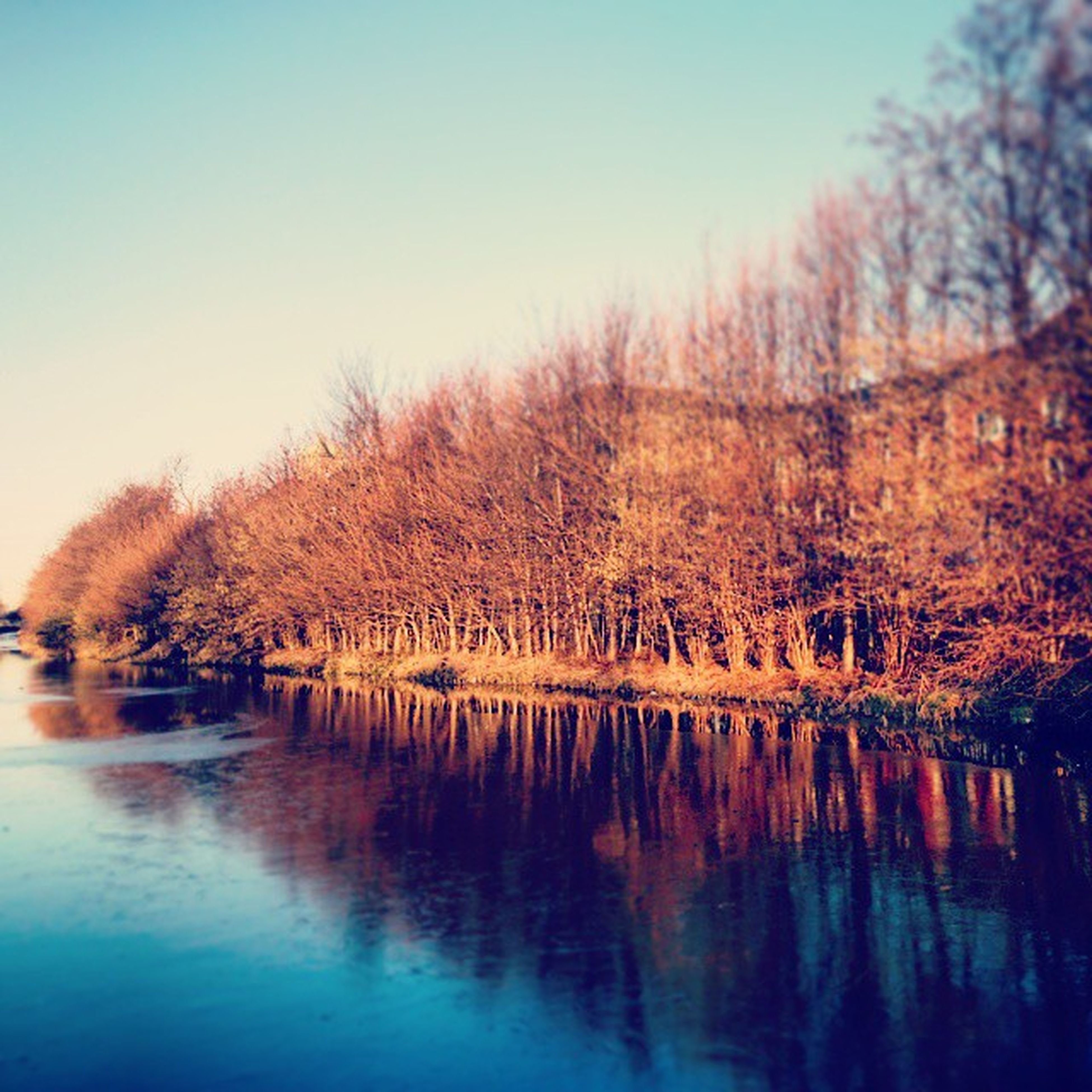tree, water, tranquil scene, tranquility, clear sky, reflection, lake, scenics, beauty in nature, waterfront, nature, season, river, autumn, idyllic, bare tree, copy space, standing water, non-urban scene, outdoors