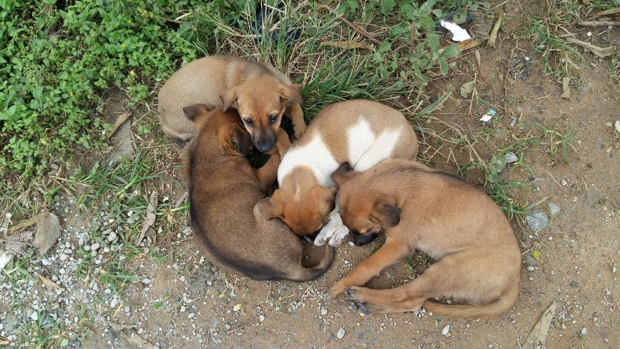 Beautiful stock photos of welpen, Animal Themes, Bangalore, Day, Dog