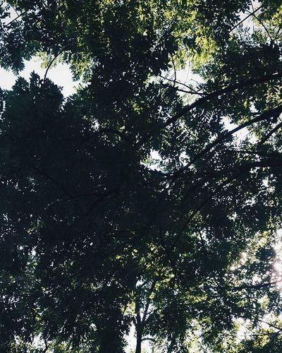 VSCO Vscocam Hojas árbol Arboles Sun Nature Mobilephotography