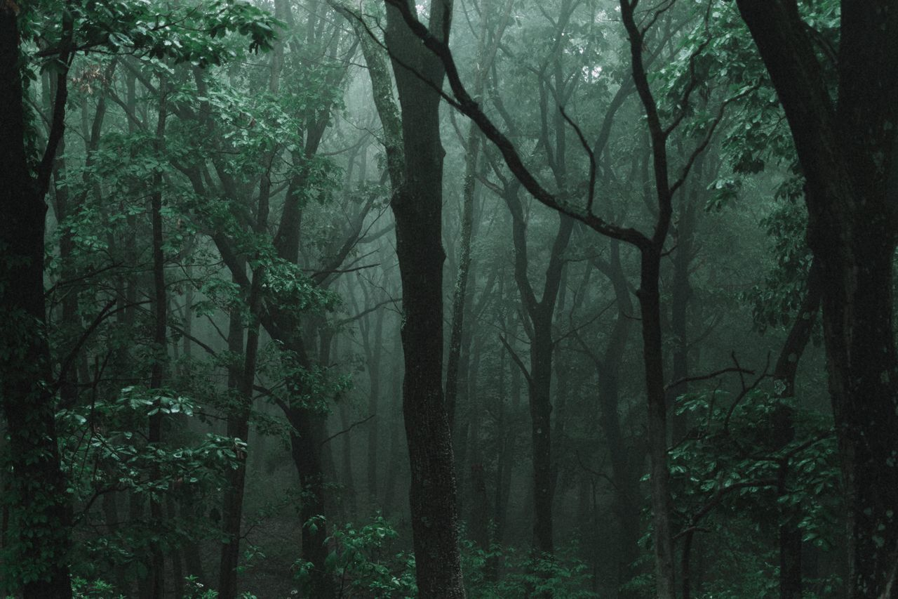 forest, tree, nature, beauty in nature, growth, branch, outdoors, tree trunk, landscape, no people, day