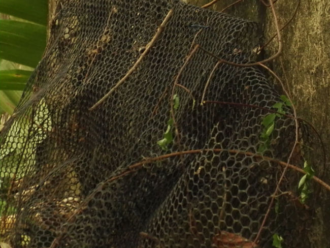 Animal Themes Animals In The Wild Close-up Day Fishing Net Nature No People Outdoors Textured