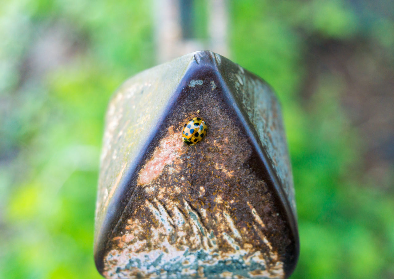 A little Ladybird 🐞 Animals Close-up Insects  Iron Lady Beetle Ladybeetle Ladybird Ladybug Little Outdoor Points Rusty Scored Small Steel