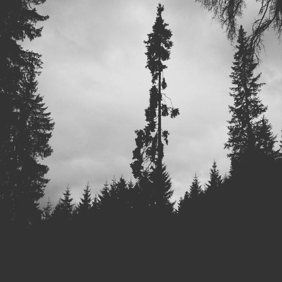 Looking up Blackandwhite Hipstamatic Tree Trees