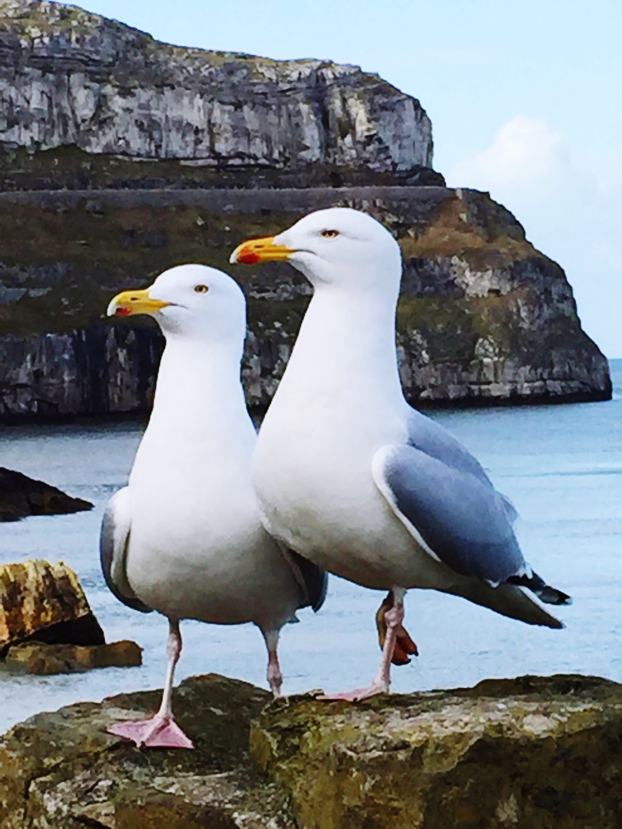 Seagulls In Love Wild Life At Its Best First Eyeem Photo Animals In The Wild Animal Wildlife Outdoors Nature Animal Themes Beauty In Nature Bird